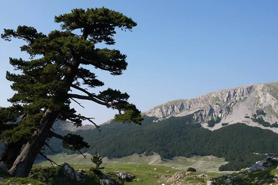 Parco nazionale del Pollino
